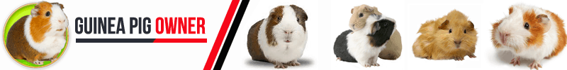 Online Community Of Guinea Pig Owners